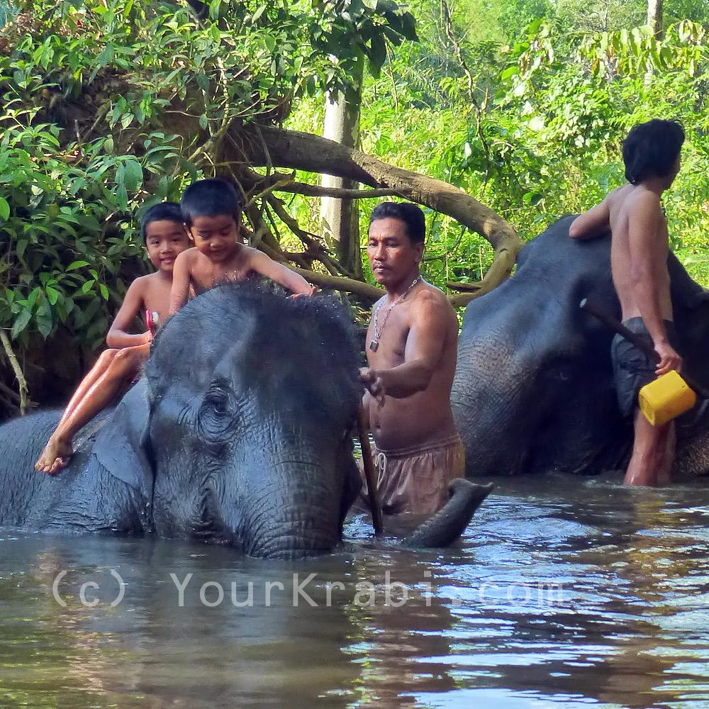 Take a bath with the elephants