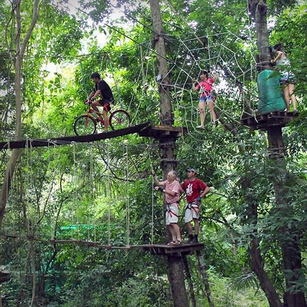 Multi level, tree friendly activities