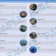 Andaman Sea Fish Guide
